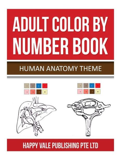 human anatomy coloring book barnes noble color by number book human anatomy theme by happy