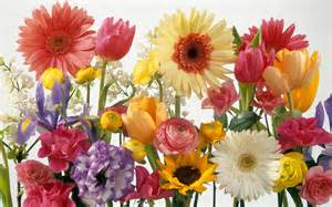 a variety of flowers wallpaper 36543