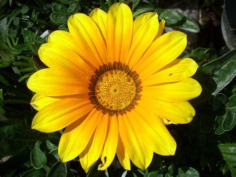 imagenes de flores solas soy de la malena 3 flores 3 emociones