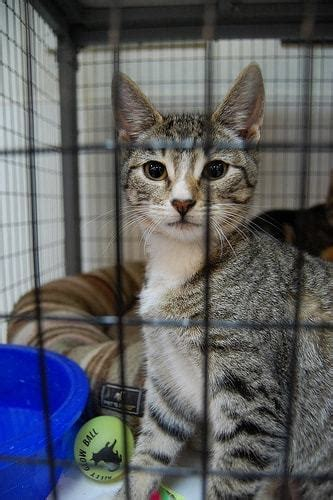 maddies fund helps san francisco bay area cats find homes