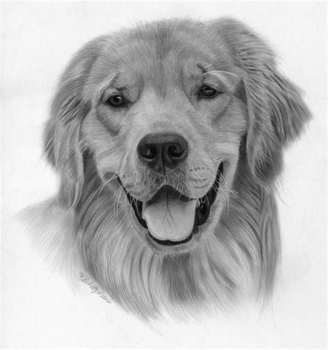 how to draw a golden retriever easy pictures realistic puppy drawings drawing gallery