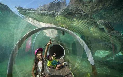 Small Ranch Homes Zoo Miami Debuts New Everglades Exhibit Bradenton Herald
