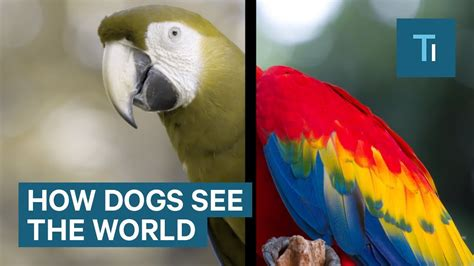 do dogs see color or black and white how dogs see the world and it s more than black and w