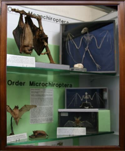 bats the history collection books history collections bats