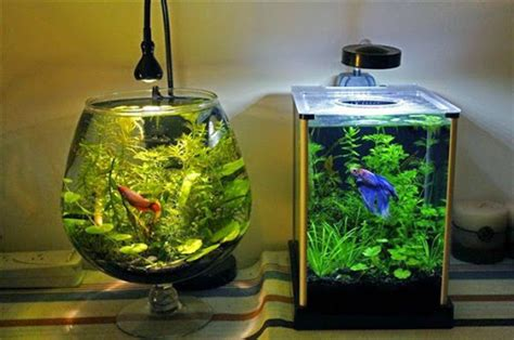 Jual Lu Aquarium Bulat model aquarium ikan hias yang simple sederhana unik dan