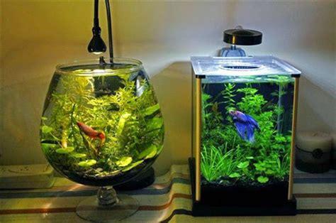 desain aquarium air tawar minimalis model aquarium ikan hias yang simple sederhana unik dan
