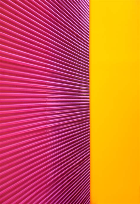 pink and yellow file pink and yellow 2 5055397806 jpg wikimedia commons