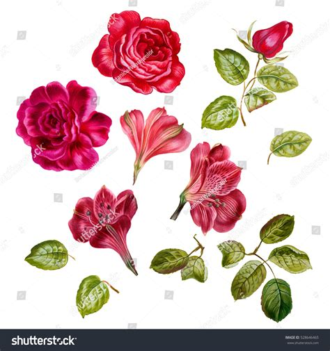 Set Pink Flowery pink flower set watercolor stock illustration