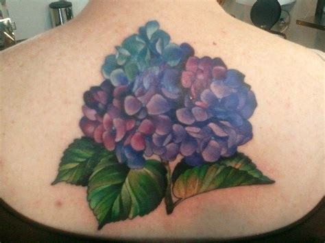 hydrangea tattoo 25 best ideas about hydrangea on