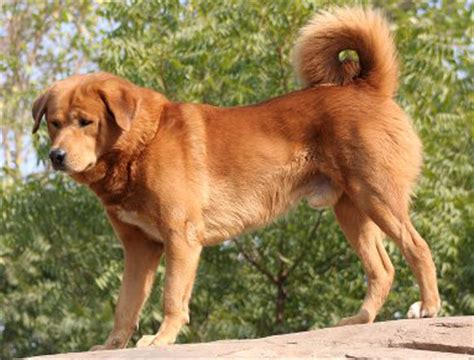 indian breeds indian breeds breeds picture
