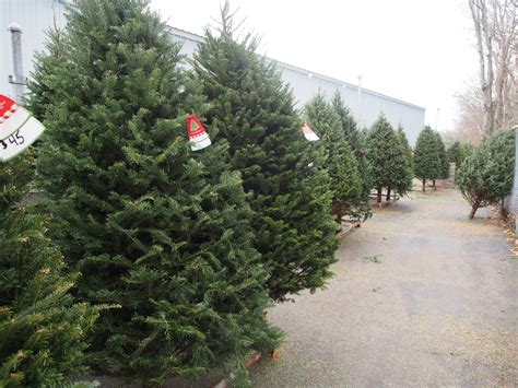 28 best christmas tree farm supplies supplies for