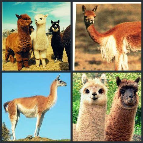 imagenes animales de la sierra imagenes ethel imagen de la flora y fauna de la selva