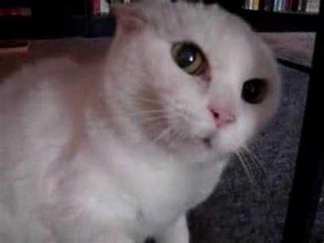 cat jokes youtube