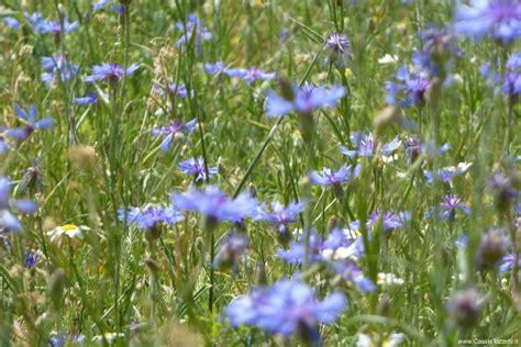 fiorita castelluccio di norcia il territorio parco e dell umbria agriturismo a