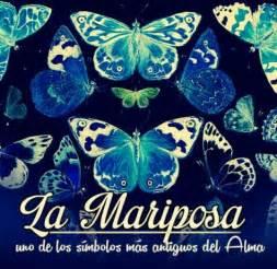 imagenes de mariposas lindas con frases 27 mariposa mariposa azul de luz