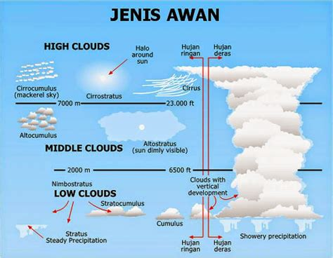 Bulu Domba Abu tarunalaut ada berapakah macamnya awan itu