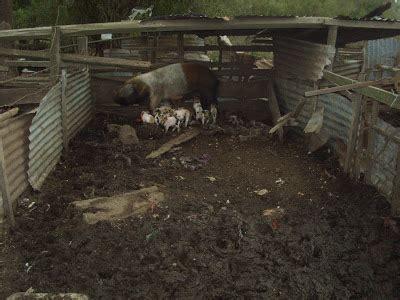 manejo de instalaciones para 8415848722 instalaciones para criaderos de cerdos