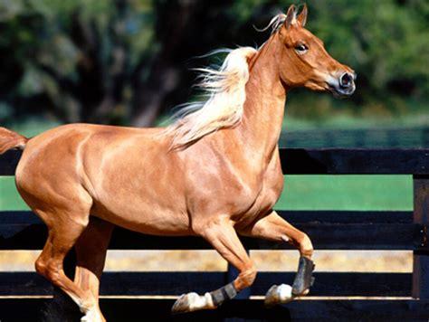 imagenes increibles de caballos todosobrelahipica fotos de caballos