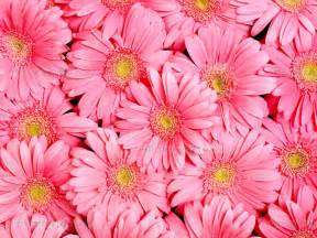 Free Kitchen Posters wall murals flowers canvas prints amp posters pink gerbera