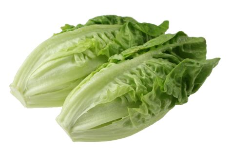 What Vegetable Is This by A List Of 10 Green Leafy Vegetables List Of Foods