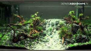 aquascaping qualifyings for the of the planted