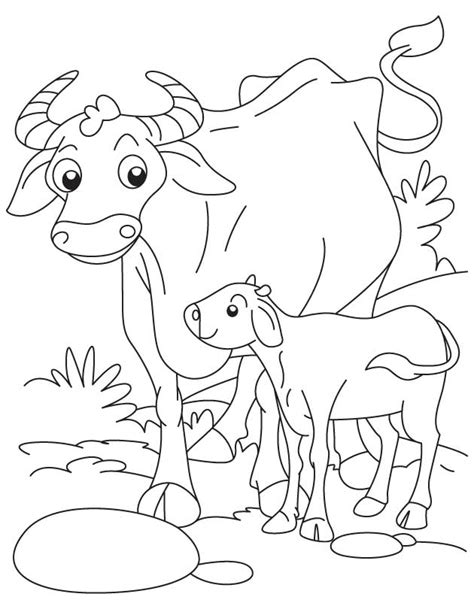 Okapi Coloring Pages Www Imgkid Com The Image Kid Has It Okapi Coloring Pages