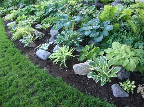 hostas forum my favorite hosta bed garden org