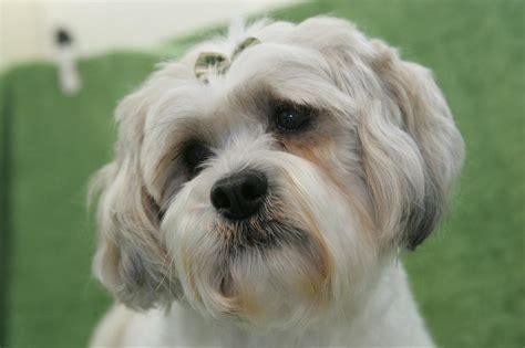 full service dog grooming green dog wash green groomer dog grooming petaluma ca 94954 707 779 9552