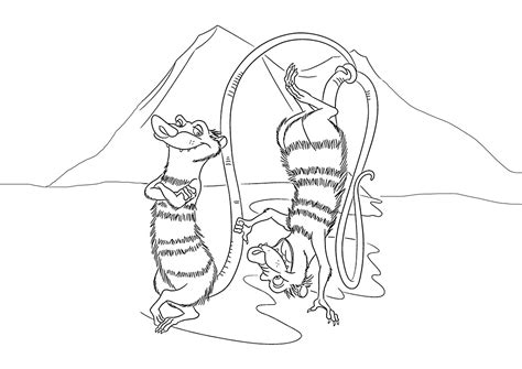 opossum coloring pages    print