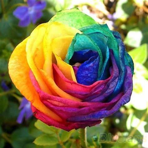color roses 60pcs lot 10 colors mix color seeds blue purple