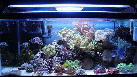 A Beginners? Guide to the Best Choice for Aquarium Corals