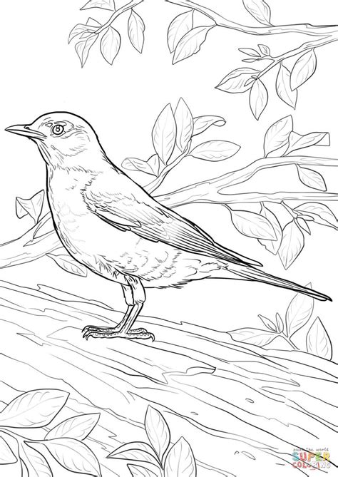 american robin coloring page  printable coloring pages