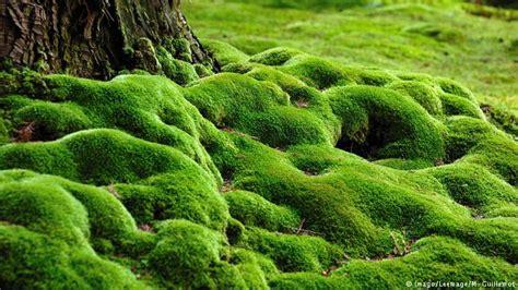 Zen Water Garden Our Beautiful Planet Saiho Ji Moss Garden Eco Africa