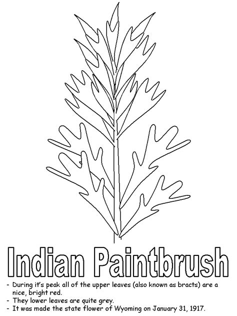 Coloring Page Indian Paintbrush | indian paintbrush coloring pages