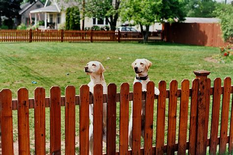 how to keep in yard without fence news for a day afternoon p l a y fencing options to keep your pets safe and secure