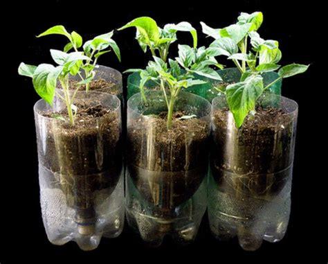 membuat tanaman hidroponik  botol aqua bekas