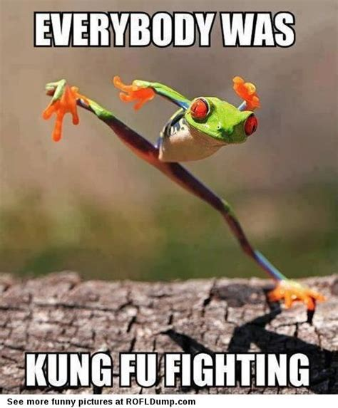 Kung Fu Meme - 25 most funny fight meme pictures and photos that will