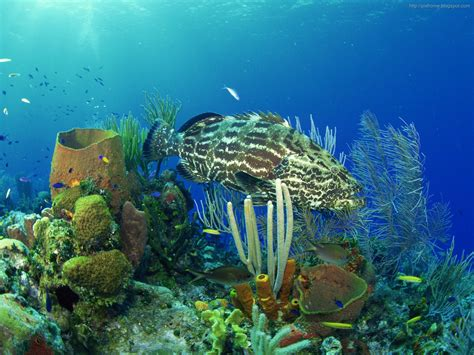 free wallpaper under the sea underwater sea animal creatures plants pictures hq 1600x1200