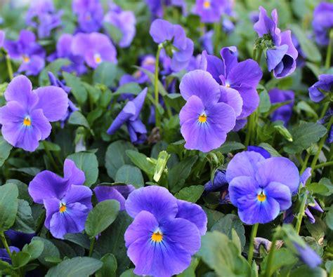 Gardenpostnz Bulbs And Plants Fom Nz S Premier Mail Flower Garden Plants
