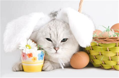 cat easter wallpaper bow wow mee ow bunnies happy easter and passover