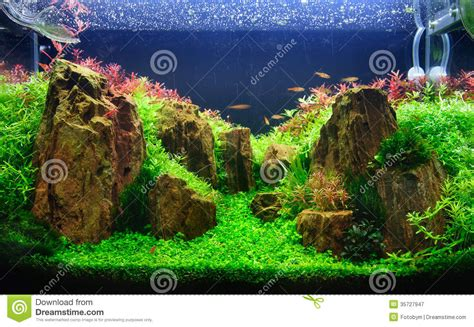aquarium design vorschläge een geplant aquarium met rotsen royalty vrije stock