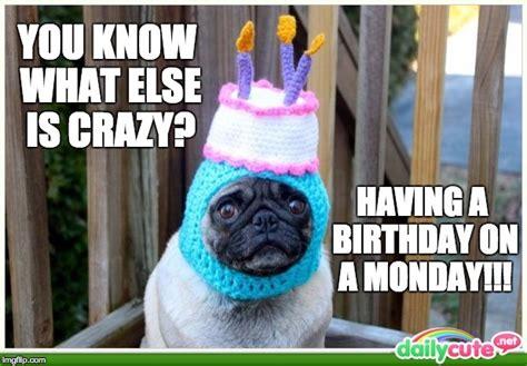 Pug Birthday Meme - pug imgflip