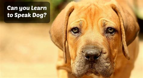 how do dogs communicate communication can you learn to speak