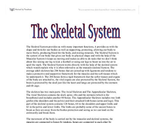 Muscular System Essay by Skeletal System Essay Skeletal System Essay Human Anatomy Essays Skeletal System Essay Muscular