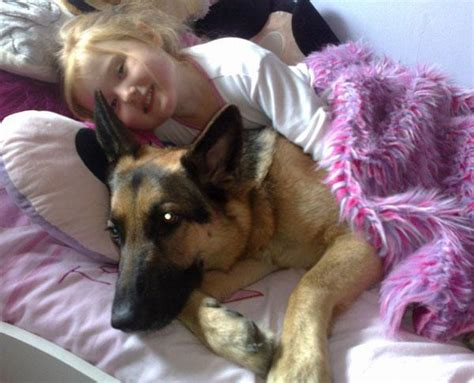 dogs in bed 9 realities of sharing a bed with your dog barkpost