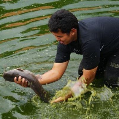 Pakan Ikan Lele Per Hari 10 cara bisnis ikan lele omset berlimpah