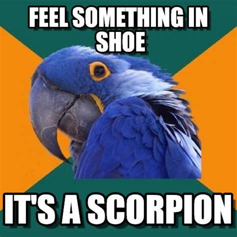 Paranoid Meme - paranoid parrot meme