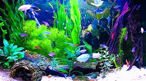 aquarium  wallpaper windows   images