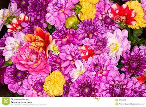 alle verschillende bloemen verschillende bloemen stock foto afbeelding bestaande uit