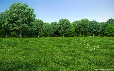 forest render xfrog image of the day forest and meadow